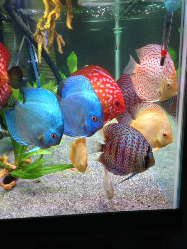 Name:  14discus.jpg