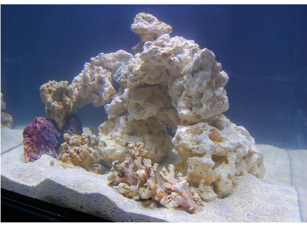 Name:  Red Sea Rock Scape 2.jpg