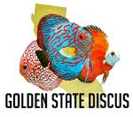 Golden State Discus's Avatar